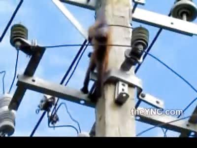 Little Monkey Electrocuted on Power Lines